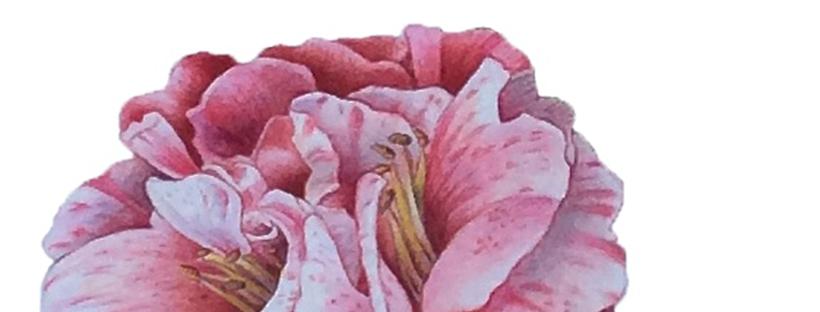 corso primaverile di acquerello botanico